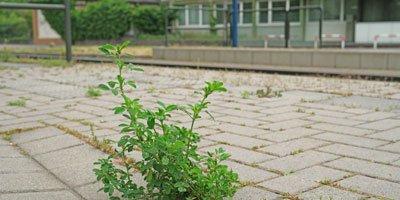 Stadtpflanzen